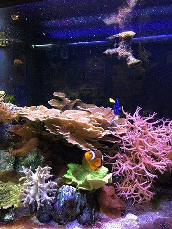 St. Lucie County Aquarium - Smithsonian Marine Ecosystems Exhibit: photo0.jpg