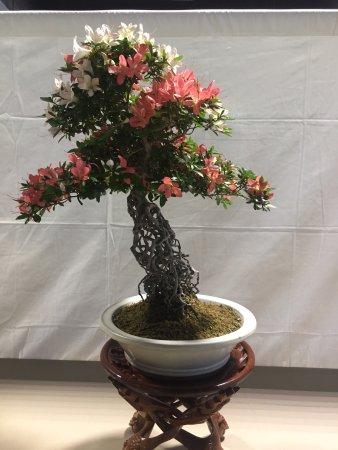 Bonsai Tree Exhibit Picture Of Historic Los Angeles Arboretum Tour Arcadia Tripadvisor