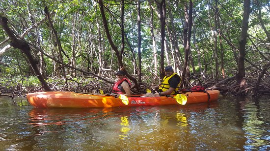 Naples Kayak Company: About to enter a Mangrove tunnel