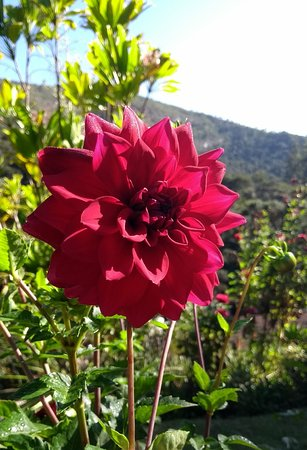 Pousada Quinta dos Passaros: Jardim maravilhoso