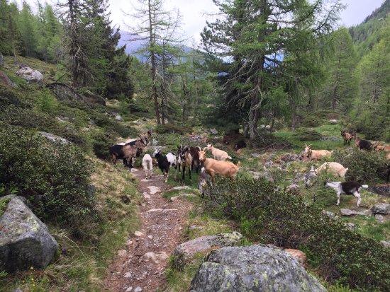 Ultimo, Itália: Lungo il sentiero