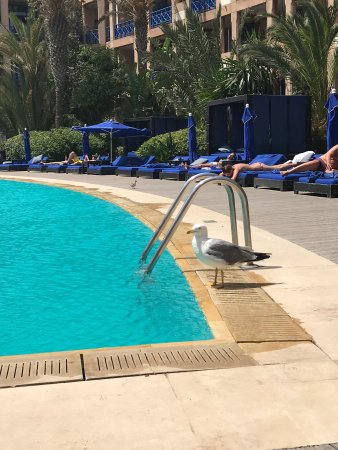 Le Medina Essaouira Hotel Thalassa Sea & Spa - MGallery Collection: photo0.jpg