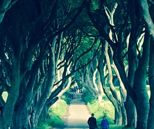 Extreme Ireland / Irish Day Tours: Dark Hedges- Game of Thrones. A stop on the way to Giants Causeway