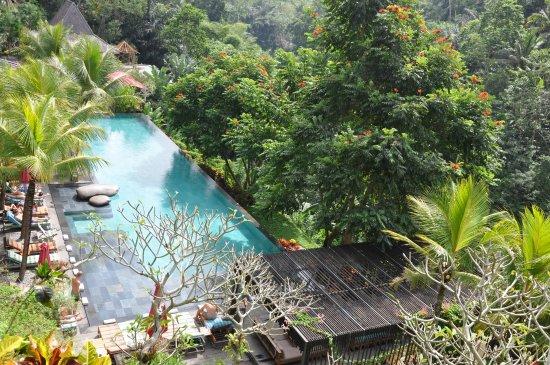 View foto di jungle fish ubud tripadvisor for Koi pond traduzione