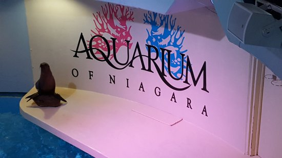 Aquarium of Niagara: 20170518_105537_large.jpg