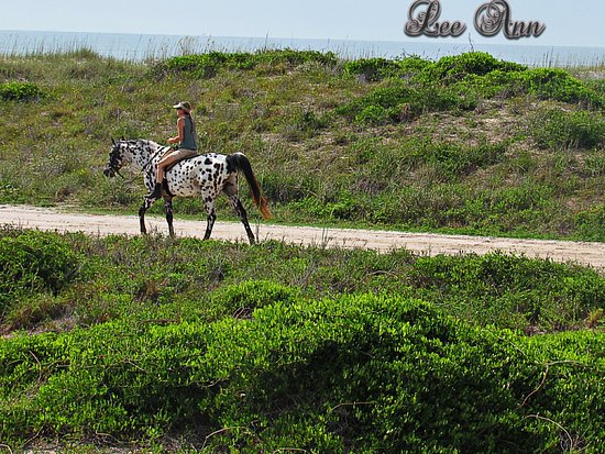 Amelia Island State Park Fl Top Tips Before You Go