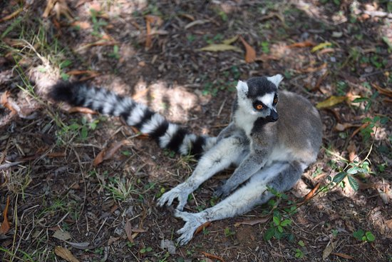 Lemurs Park : 'i like to move it' Lemur from Madagascar movie :)