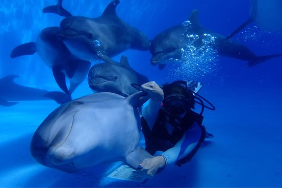 ‪Diving with Dolphins‬