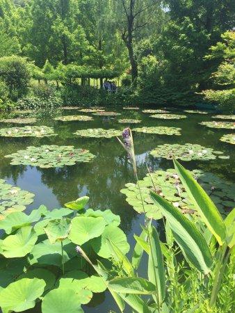 photo2.jpg - 北川村北川村 莫內的花園的圖片 - TripAdvisor