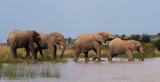Khakiweed Photographic Safaris