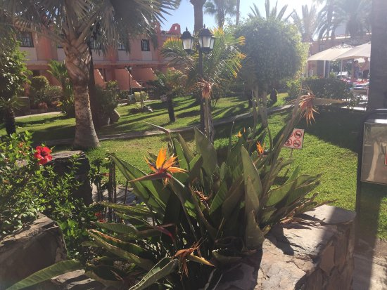 Picture of jardin del sol apartments playa for Jardin de sol