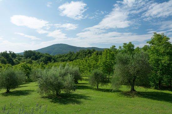 Ciciano, Italia: OLIVETA