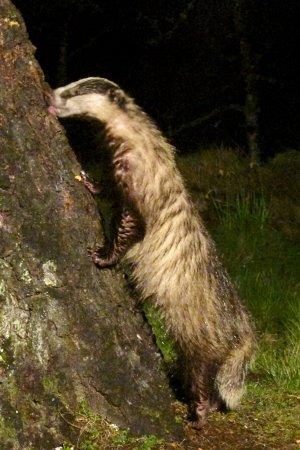 Speyside Wildlife : A tasty snack of peanut butter...