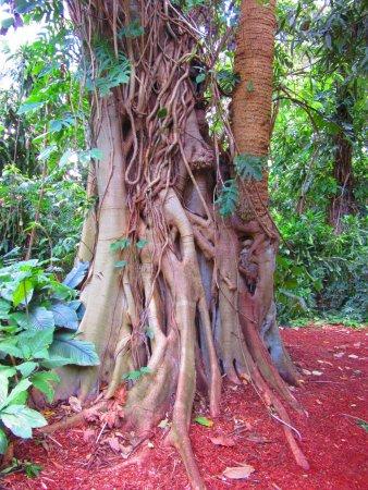 Mounts Botanical Garden: In de botanische tuinen