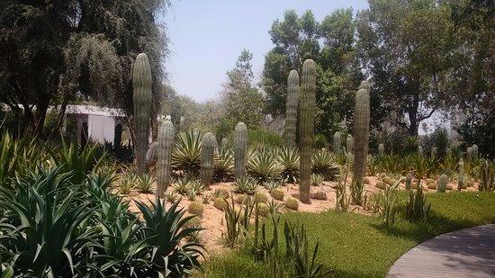 Cactus garden - Picture of Al Noor Island, Sharjah - TripAdvisor