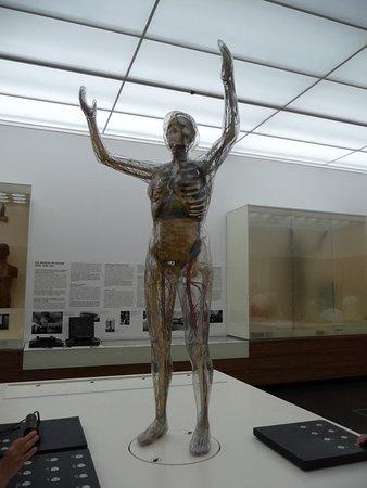 Deutsches Hygiene-Museum: die Gläserne Frau zeigt ungeniert ihre inneren Organe