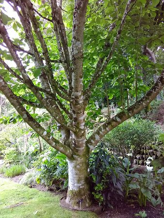 St Austell, UK: branched tree