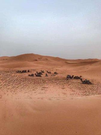 Sahara Wanderlust