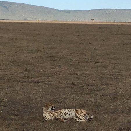 Fairmont Mara Safari Club: photo1.jpg