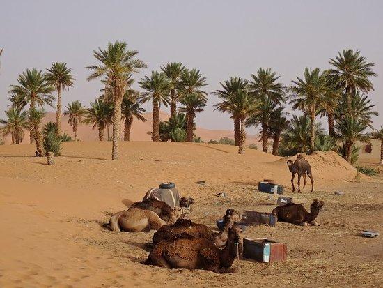 Desert dating maroc when should you start dating after a divorce