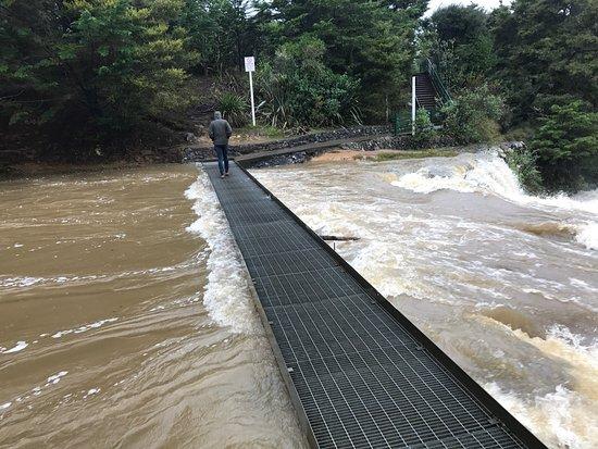 Whangarei Falls: photo3.jpg