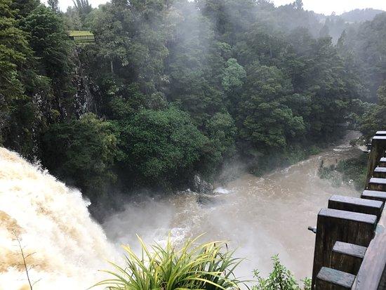 Whangarei Falls: photo4.jpg