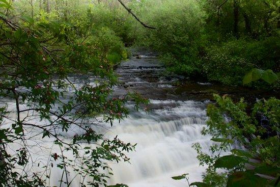 Waterfalls of Hamilton: Darnley Cascades