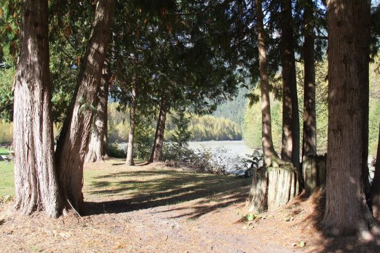 Pemberton, Canadá: Ancient cedars circle next to Lilloet River popular for wedding vow site