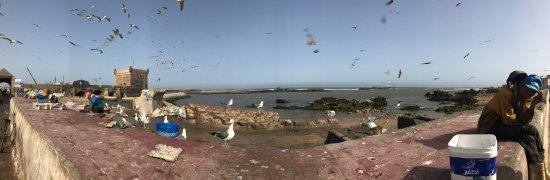 Remparts d'Essaouira : Ramparts and more ramparts.