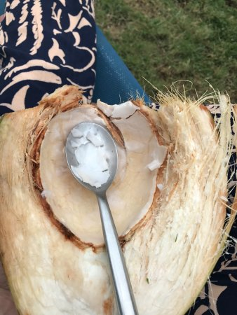 "The Resort at Wilks Bay: Daily ""jelly"" from the fresh coconuts"