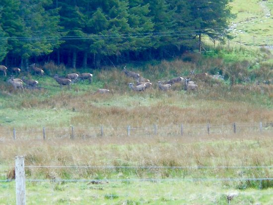 Speyside Wildlife : Red deer on all day wildlife tour with Speyside