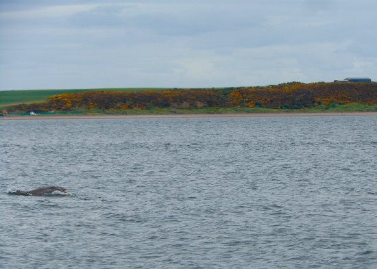 Speyside Wildlife : Dolphin-watching on our all-day wildlife tour