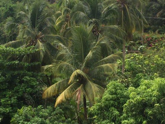 Casa del Vega: The jungle next door