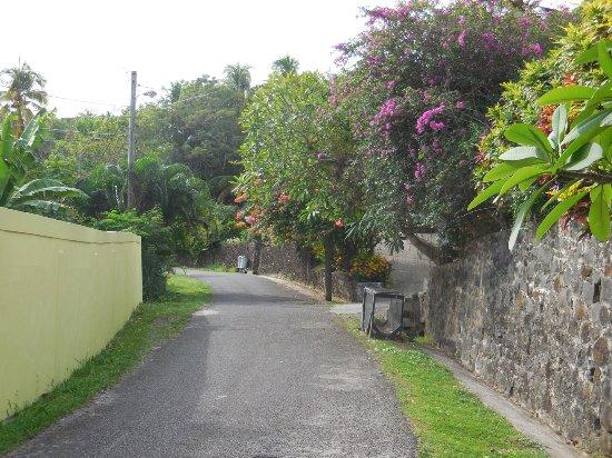 Casa del Vega: Beautiful leafy quiet road outside