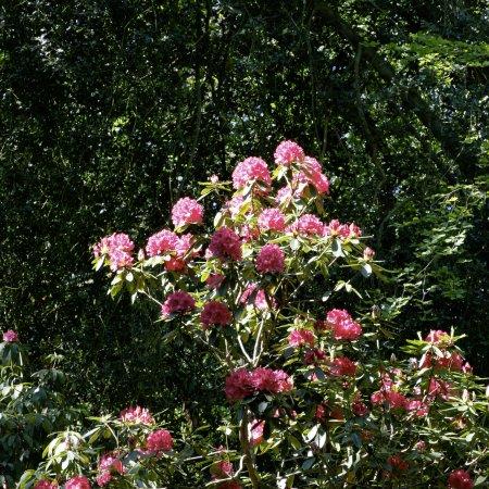 Varengeville-sur-Mer, Francia: The Park Rhododendron