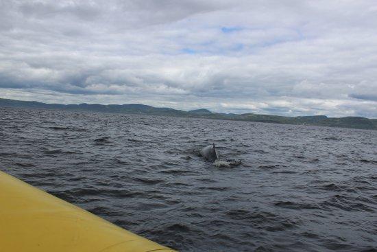 Tadoussac, Canada: Petite baleine