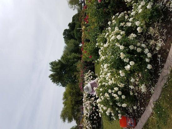 Rose Garden at Mesa Community College: Gardener