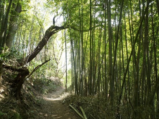 Kamakura, Japan: 大丸山~天園03