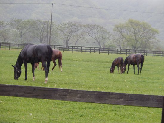 Racing Horse Grazing Farm