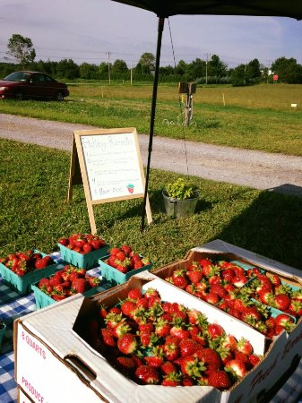 Warsaw, NY: Strawberry Stand.