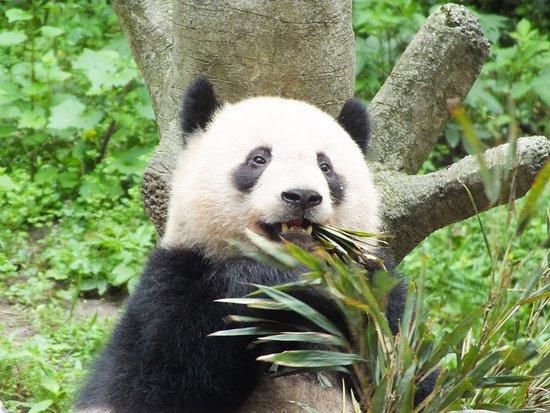 Chongqing Zoo (Chongqing Dongwuyuan)