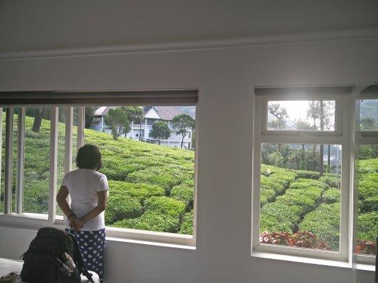Gruenberg Tea Plantation Haus: IMG_20170602_082344_large.jpg