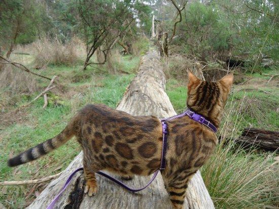 Robin Hood Reserve