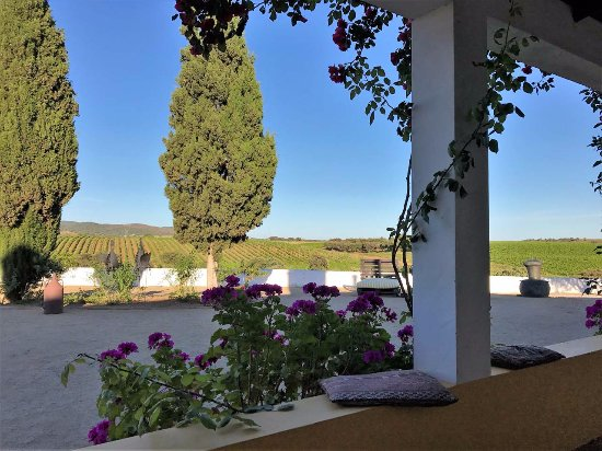 Herdade do Sobroso: Yellow Room view towards the vineyards