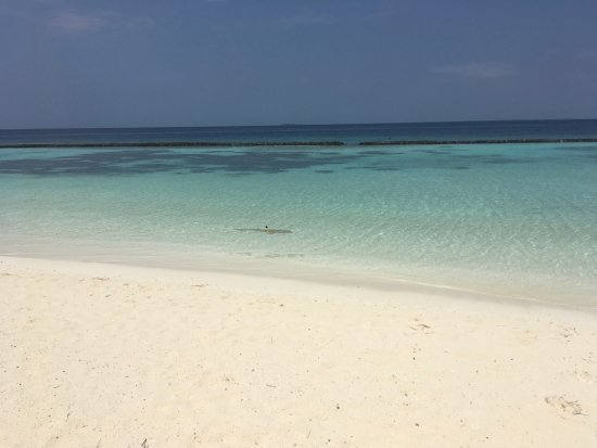 باروس جزر المالديف: Hai in Sicht!