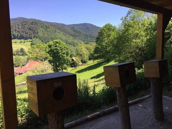 Гутах-им-Шварцвальд, Германия: Fühlen