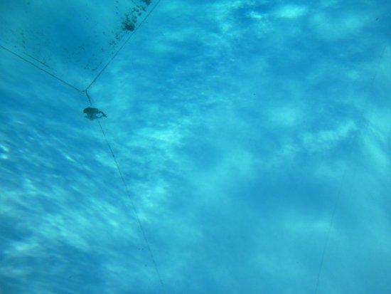 Camping l'Hirondelle: un crapaud mort et une piscine sales dès l'ouverture