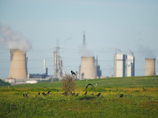 Middlesbrough, UK: Crows with industrial backdrop