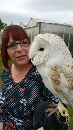 Congresbury, UK: Inca the beautiful barn owl