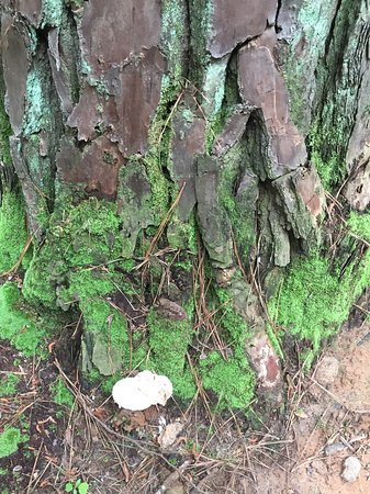 Marietta, GA: Moss and mushrooms